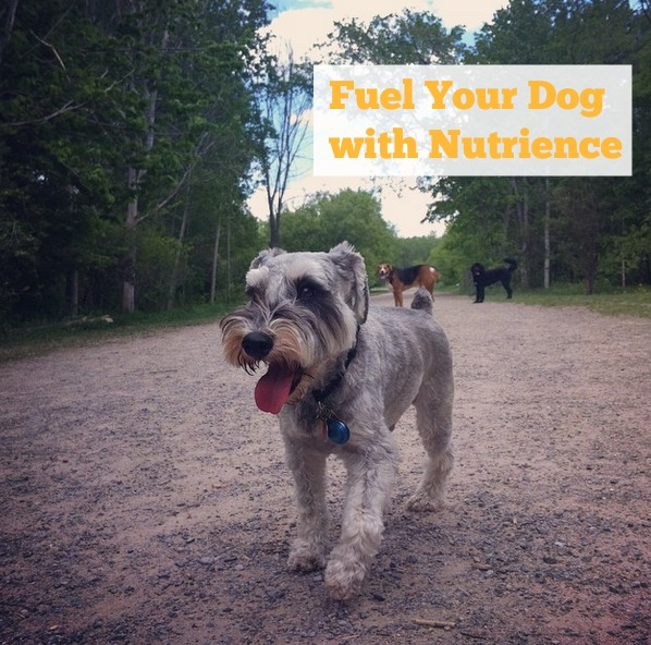 Fuel Your Dog With Nutrience