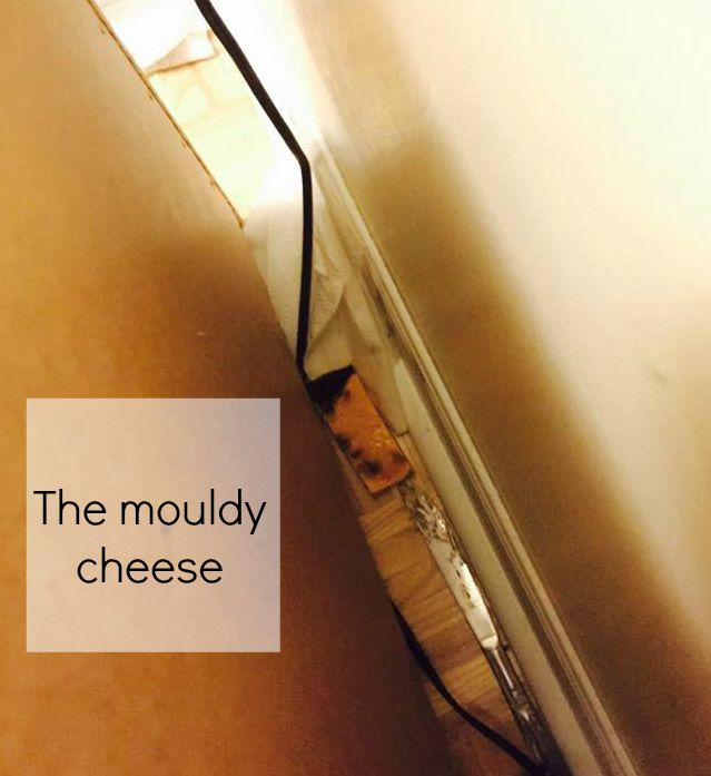 the mouldy cheese